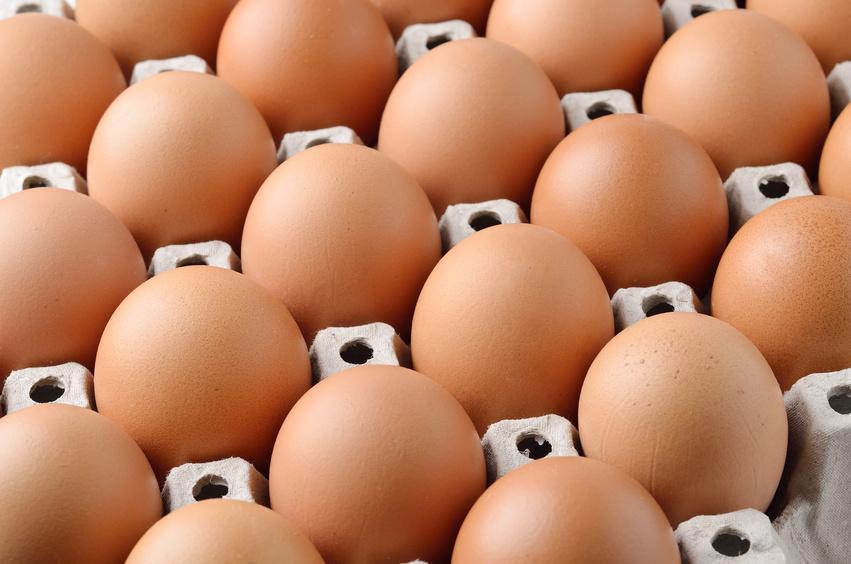 matrix of eggs